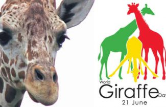 לכבוד יום הג'ירפה העולמי: ג'ירפה מפנקת אתכם ברמקול סטריאופוני נייד