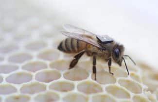 אינטל והלוח הזעיר Edison מצטרפים למסע להצלת הדבורים
