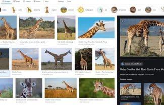 אהבתם? גוגל משדרגת את ממשק התמונות ברשת